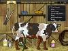 Giochi di Mucche da Lavare - Esposizione